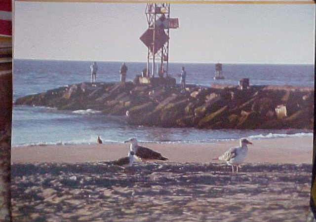 Ocean City Seagulls